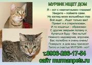 Полосатый котик Мурзик ищет дом